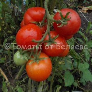 Семена томатов Бони бестер купить