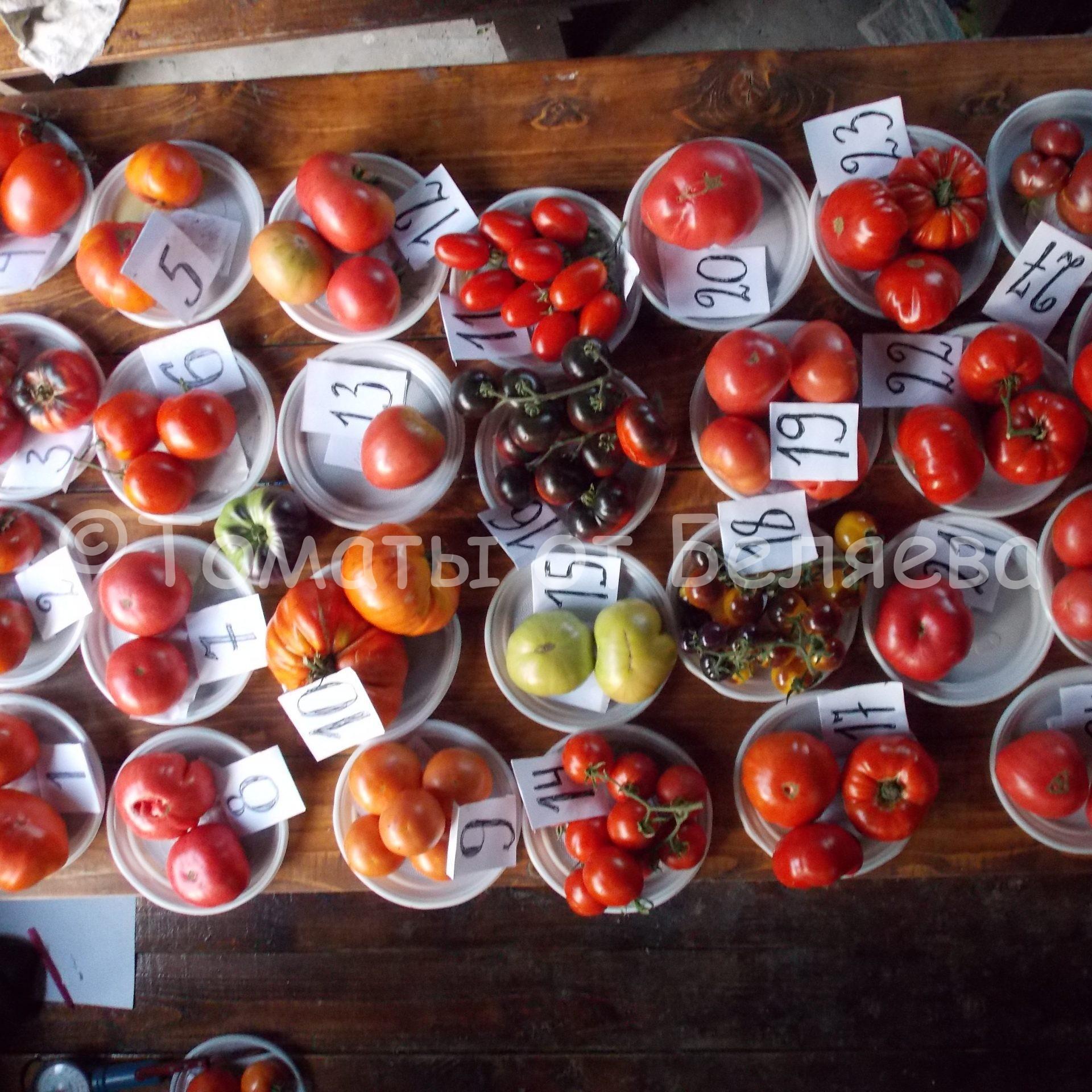 вкусные сорта томатов от Беляева