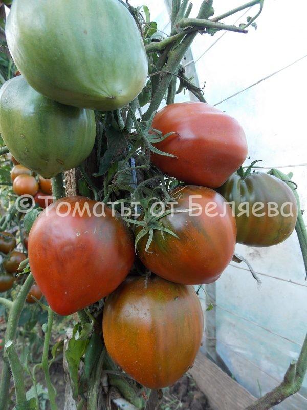 Семена томатов от частных коллекционеров Томат Чёрный Оксфорд