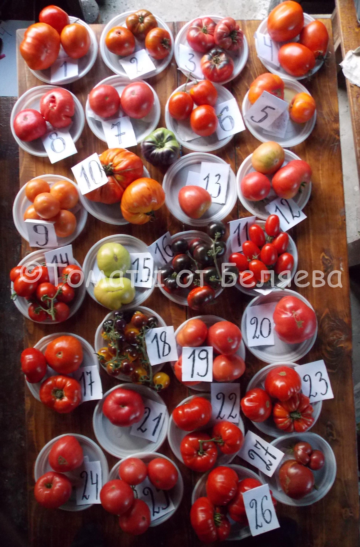 Вкусные томаты от Беляева