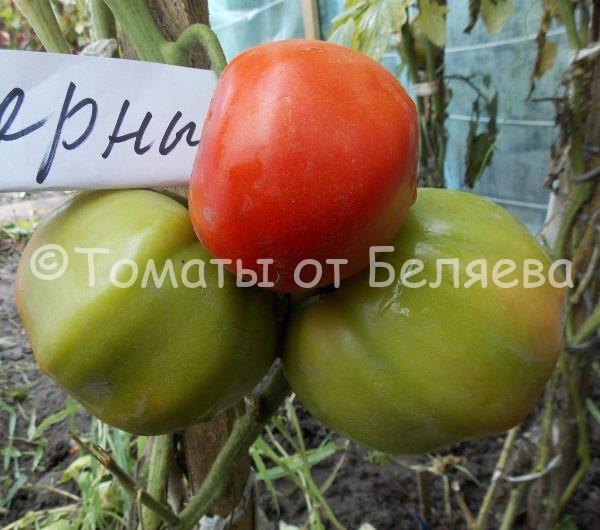 Семена томатов от частных коллекционеров Томат Северные