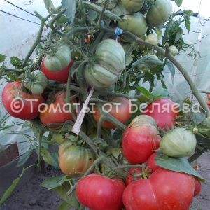 Семена томатов Соковый томат купить