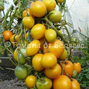 Томат Буян семена купить