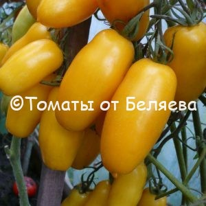 Томат Банана семена купить